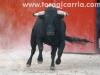 arganda-novillada38