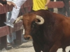 coslada2011_17