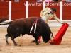 toros30-Recuperado