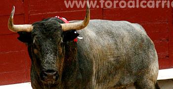 Toros de José Escolar | Las Ventas 12-05-11