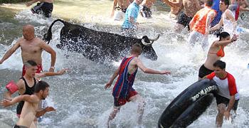 Trillo, vacas por el tajo | 18-06-11