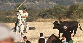 Valdesaz, encierro por el campo | 24-08-11