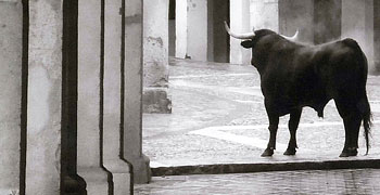 Antonio Serrano gana el VII concurso de fotográfia taurina