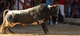 toros Valfermoso