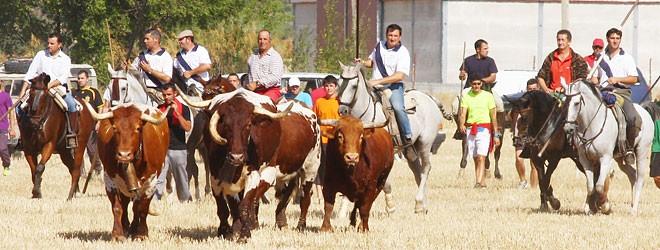 Encierro por el campo en Yunquera de Henares | 20-09-14