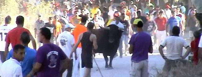 Vídeo del encierro de Brihuega 2014