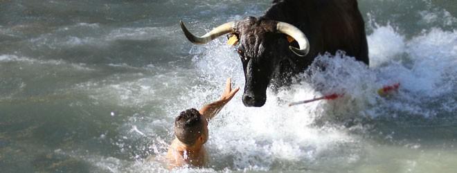 Vacas por el Tajo 2015