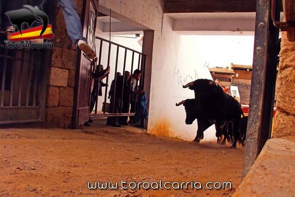 Premio Brihuega 2 ToroAlcarria