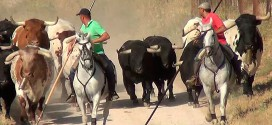 Encierro de Brihuega 2016, los toros