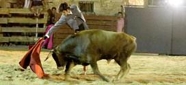 Toros en Azañón