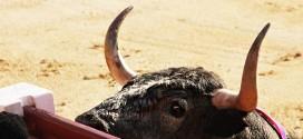 Toro de Madrid