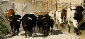 Encierro de Brihuega 2018, los toros
