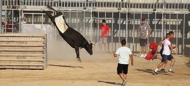Vacas Sagunto