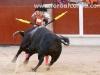 toros35-Recuperado