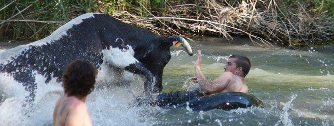 Vacas por el Tajo