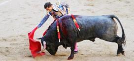 toros de Adolfo