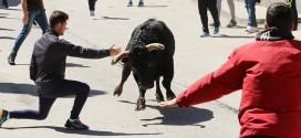 toros en Anchuelo