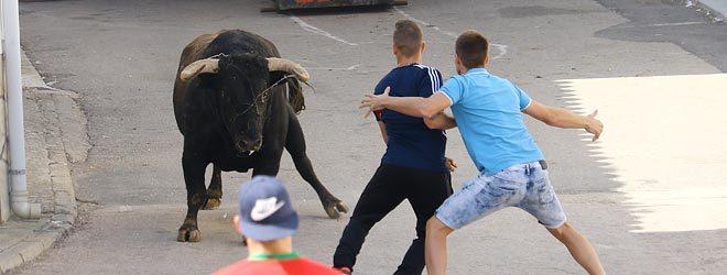 Torrejoncillo toro