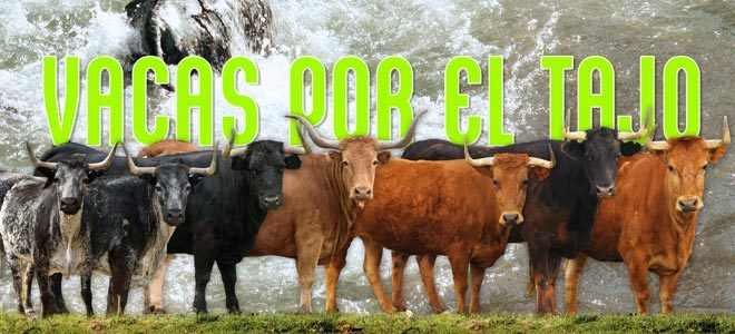 Vacas Tajo 2019