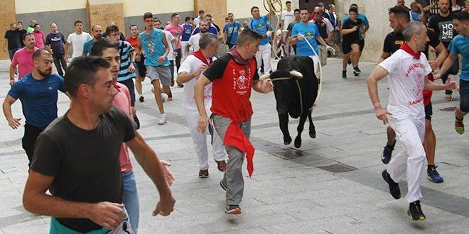 Vacas Cuenca 2019